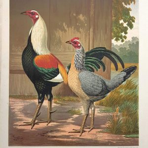 Mr John Douglas's Duckwing Game Fowls, 'Sir Harry' And 'Lady'